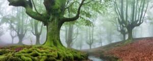 The-FOREST-MARAVILLADOR-740x300